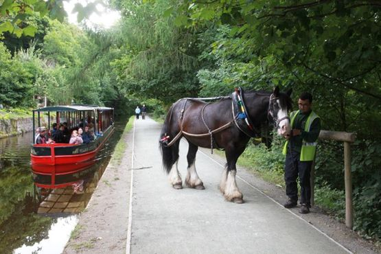 horse drawn boat trips
